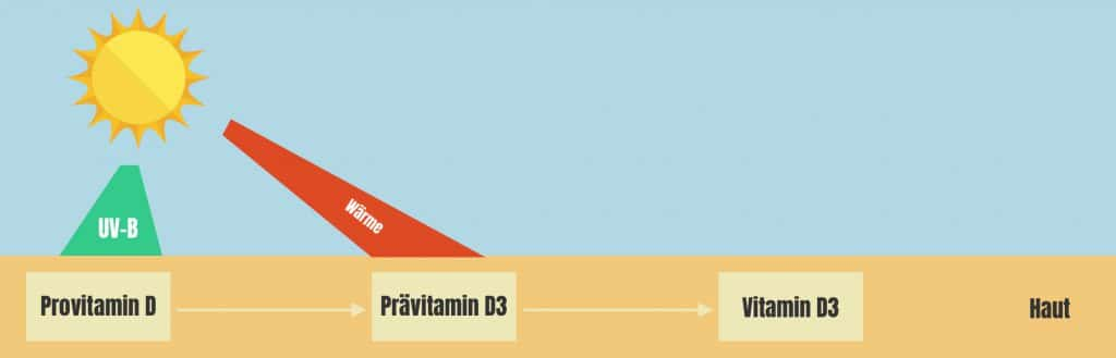 Vitamin D Synthese Sonne Haut Infografik